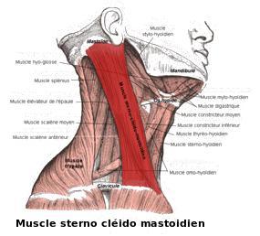 La douleur dans la nuque et le cou la sinusite maxillaire