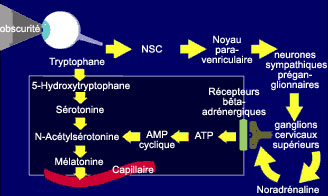 oiel_et_melatonine-47a5e.jpg